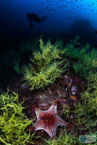 Canon R5 underwater photo