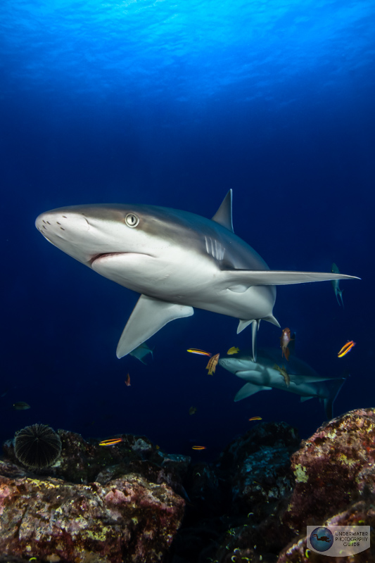 One of the best rules for photographing sharks - don't make eye contact!